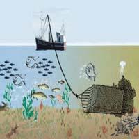 Muslingefiskeri ødelægger havbund