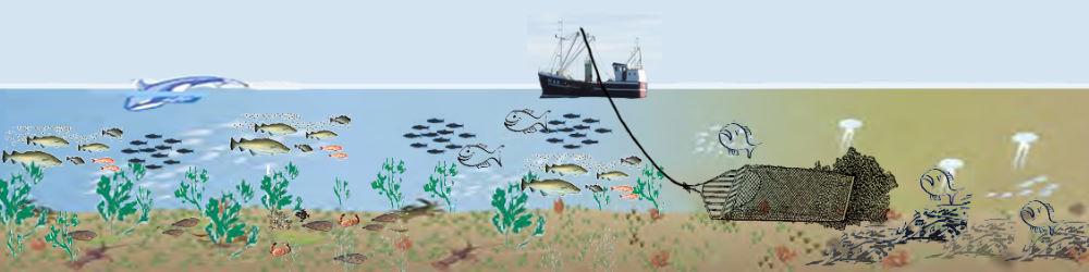 Muslingefiskeriet ødelægger havmiljøet